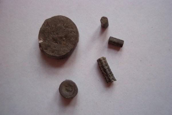 Image: Castleton geology - crinoids.